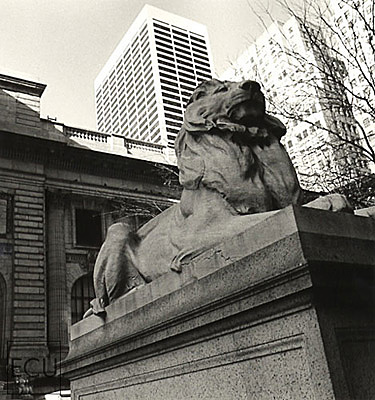 Black and white photo of the stone Beaux Arts architecture of the New York Public Library and its lion on Fifth Avenue