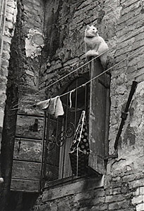 Black and white photo of a cat sitting on a shutter near the Campo San Rocco in the San Polo sestiere of Venice, Italy