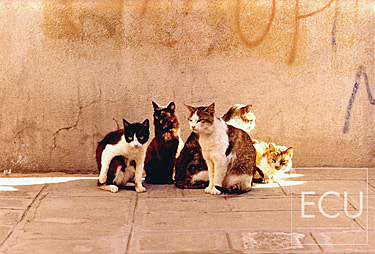 Color photo of a family of cats in the Cannaregio sestiere of Venice, Italy